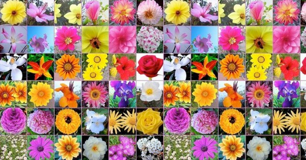 Image result for las flores bach