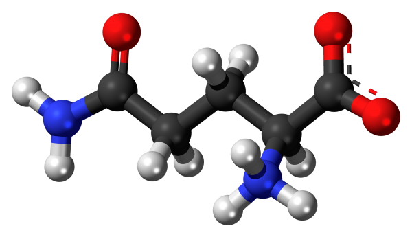 Glutamina, ¿Para qué sirve y cuáles son sus funciones?