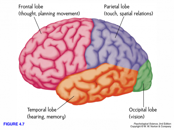 Para qué sirve el córtex frontal del cerebro?