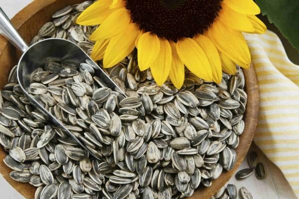 ¿Para qué sirven y cuáles son los beneficios de las semillas de girasol?