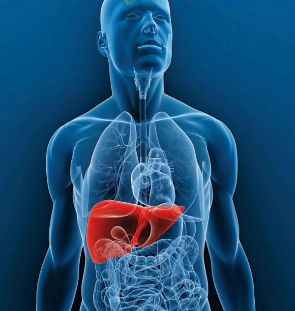 ¿Para qué sirve el hígado y cuáles son sus funciones?