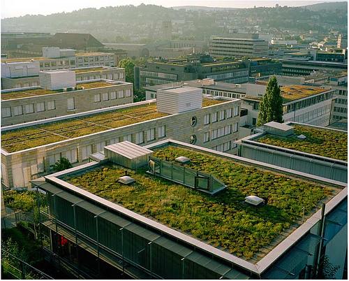 ¿Para que sirven las terrazas y los techos verdes?