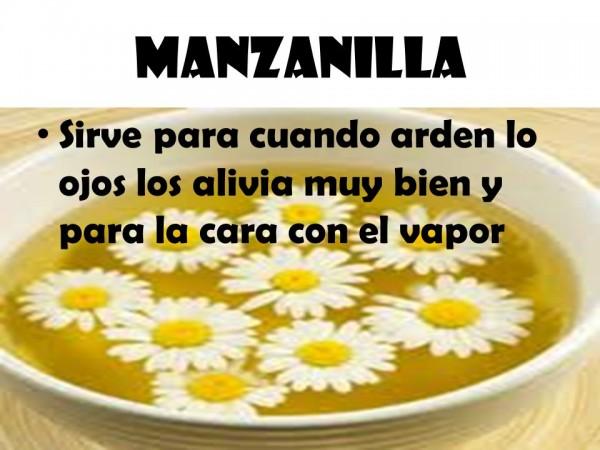 Para qu sirve la manzanilla conoc sus propiedades for Manzanilla planta medicinal para que sirve