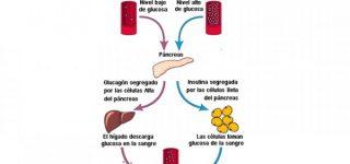 Para qué sirve la Insulina