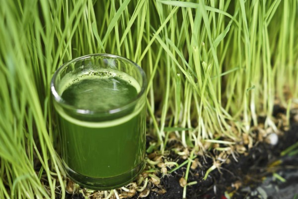 ¿Para qué sirve consumir clorofila?