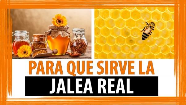¿Para qué sirve la Jalea Real?