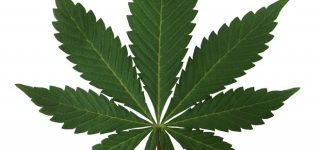Para que sirve el cannabis terapéutico o marihuana
