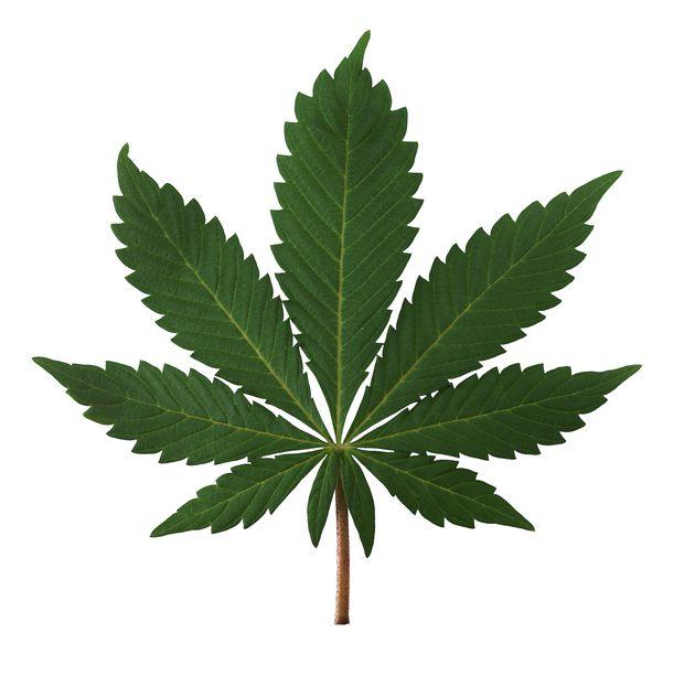 Christmas Tree Marijuana