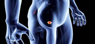 Para que sirve la próstata