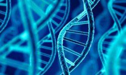 Para qué sirve el ADN (Ácido desoxirribonucleico)